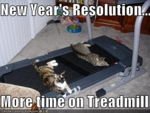 treadmill-cats