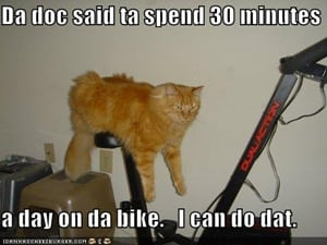 funny-pictures-cat-excercise-bike
